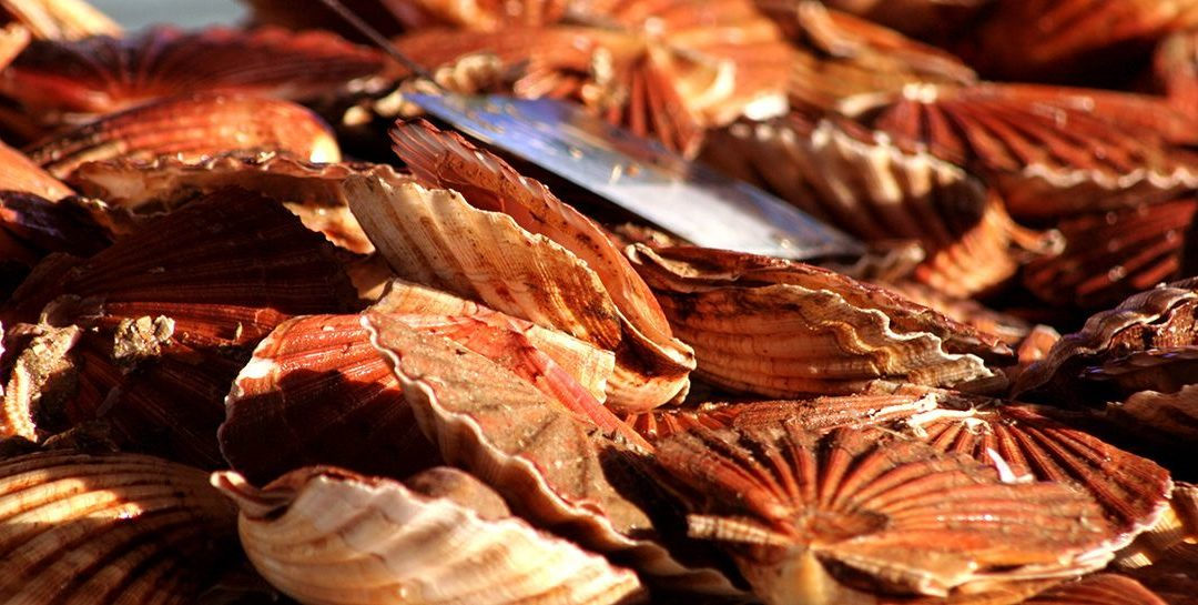 Week-end en normandie gastronomique : fête de la coquille saint jacques