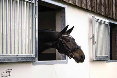 cheval ecurie haras du manoir